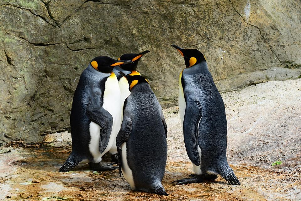 Pingwin 4.0 działa od 2 września
